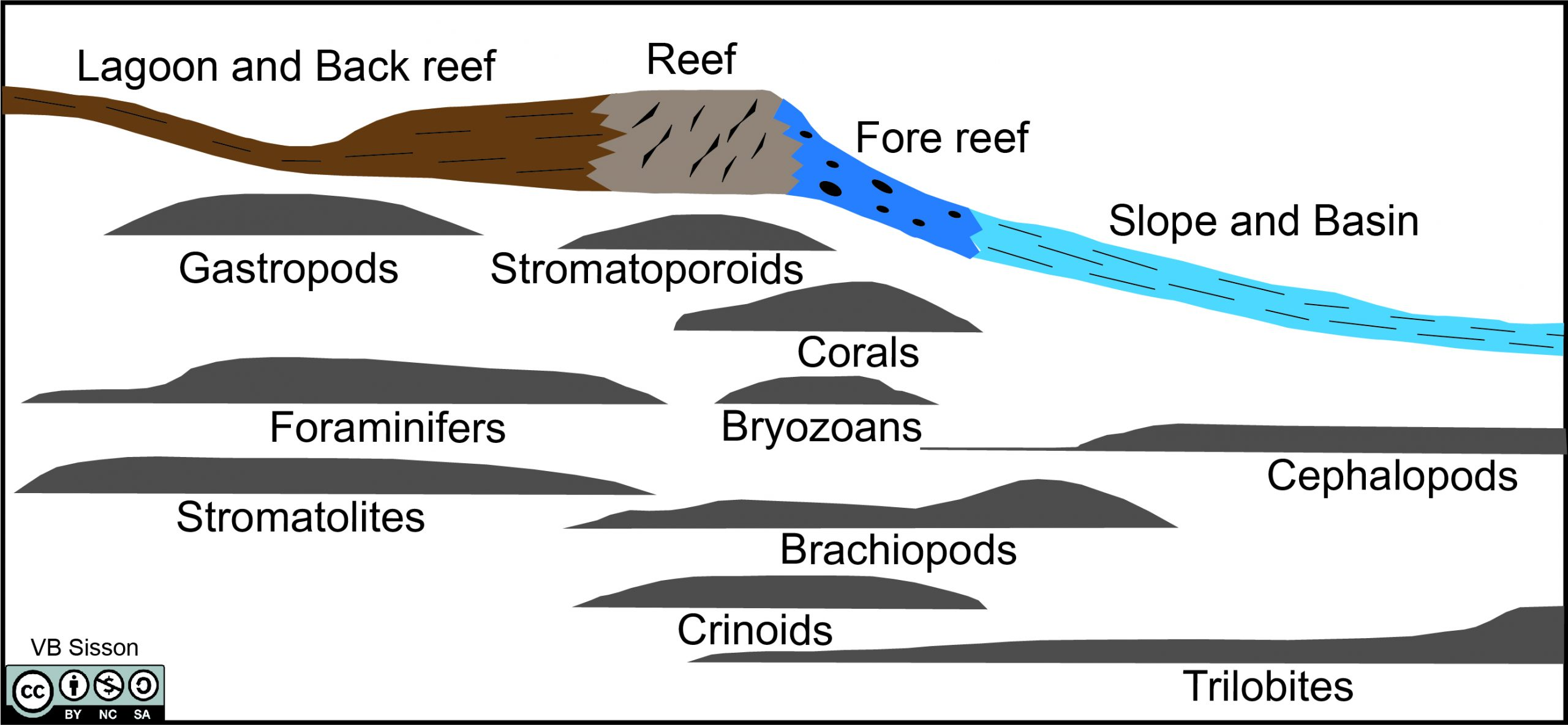 Structure of Devonian reef with distribution of various fossil types