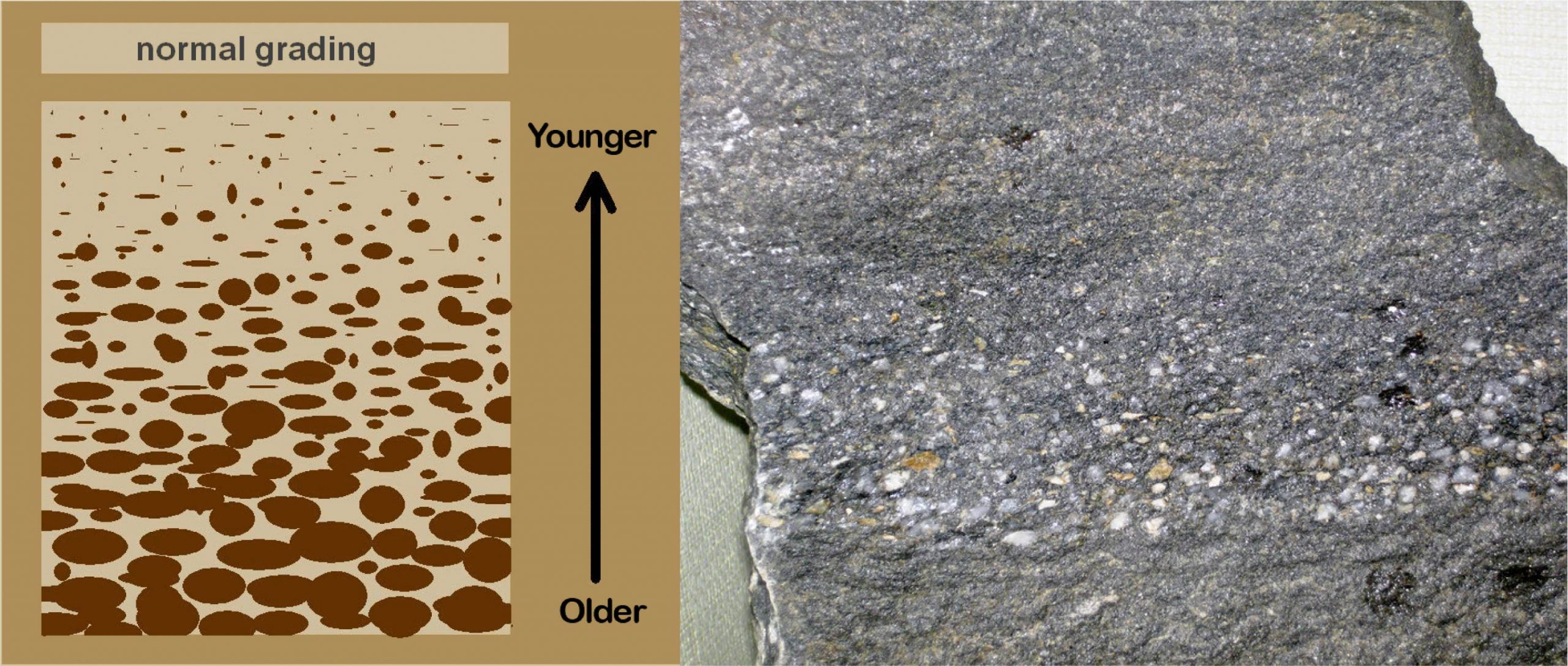 This images show normal grading. The left side of the figure is a sketch and the right a rock sample.