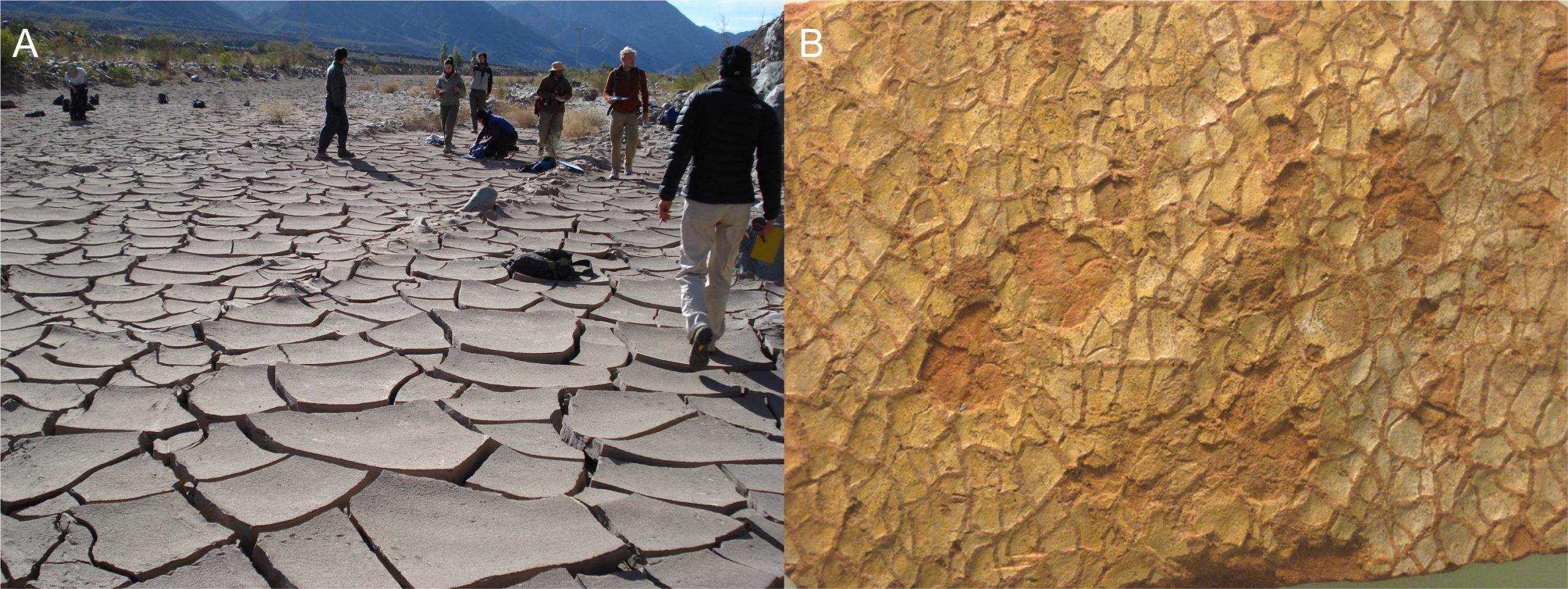 These images show mudcracks. The left image shows modern dried up clay-rich sediment. The right image has ancient cracks.