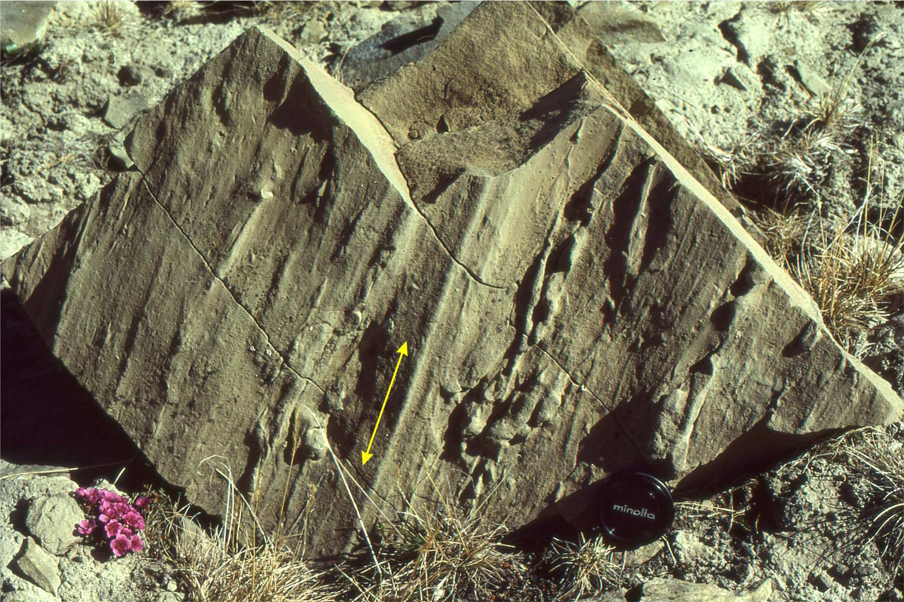 This image shows groove casts, which are elongated impressions in the rock. These are oriented up-down.