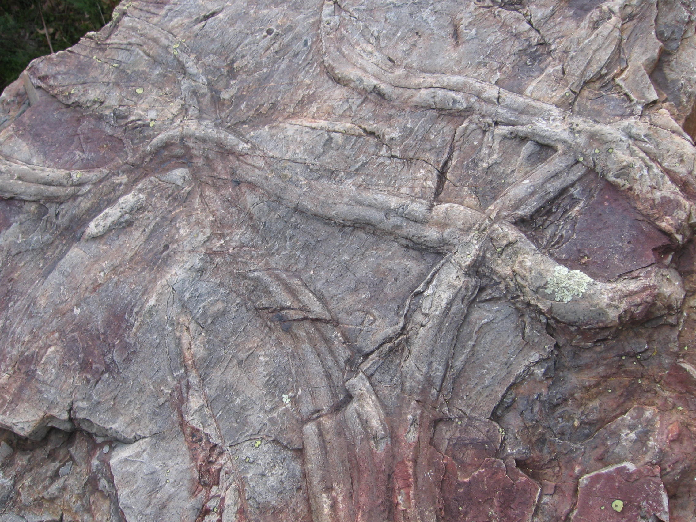 This rock has dual-lobed tracks that are part of the Cruziana ichnofacies.