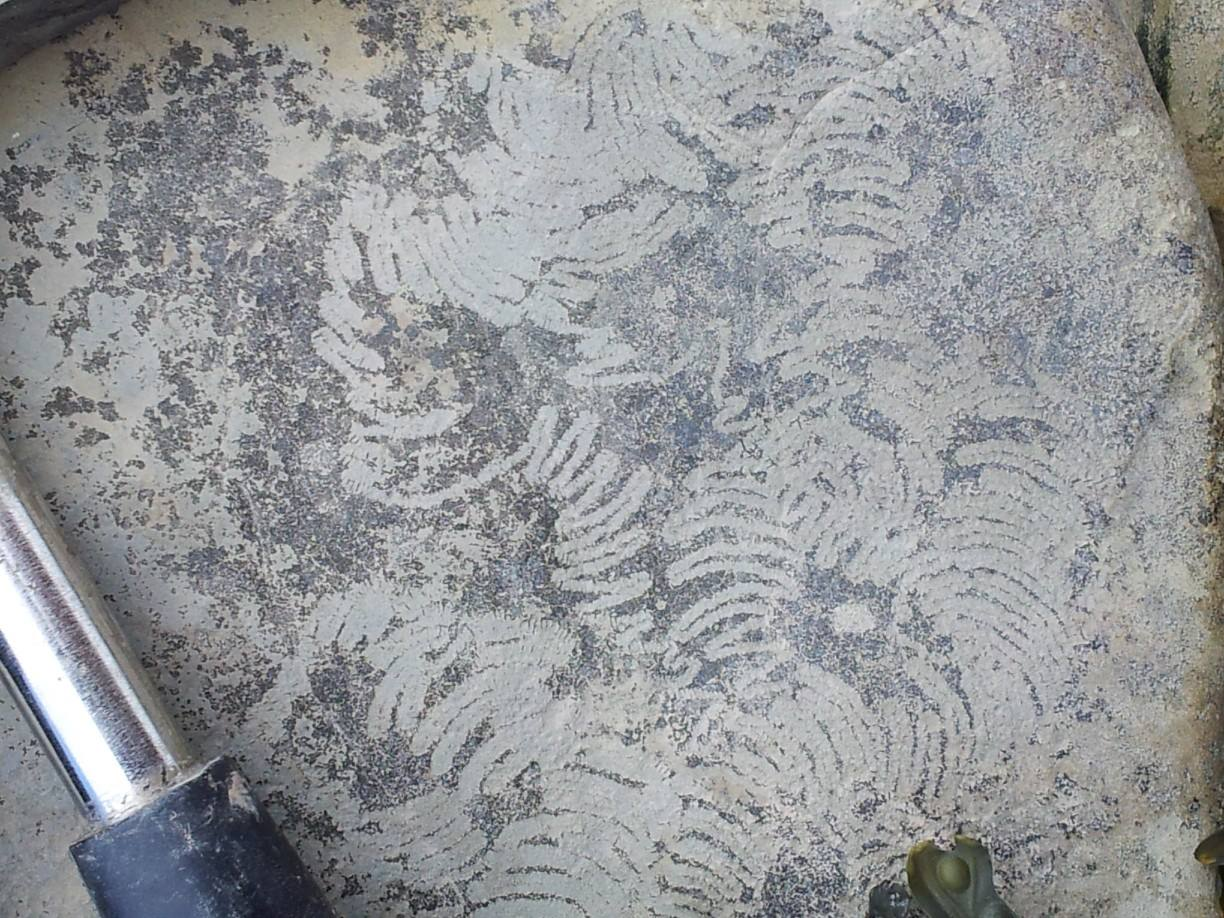 The tightly curving markings on this rock are the Nereites trace fossils.