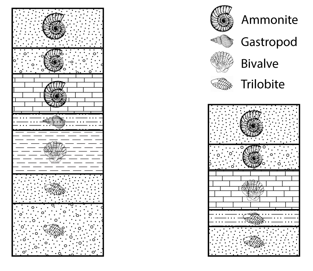 Two stratigraphic columns for exercise 3.6. Note, the fossils in some of the stratigraphic units.