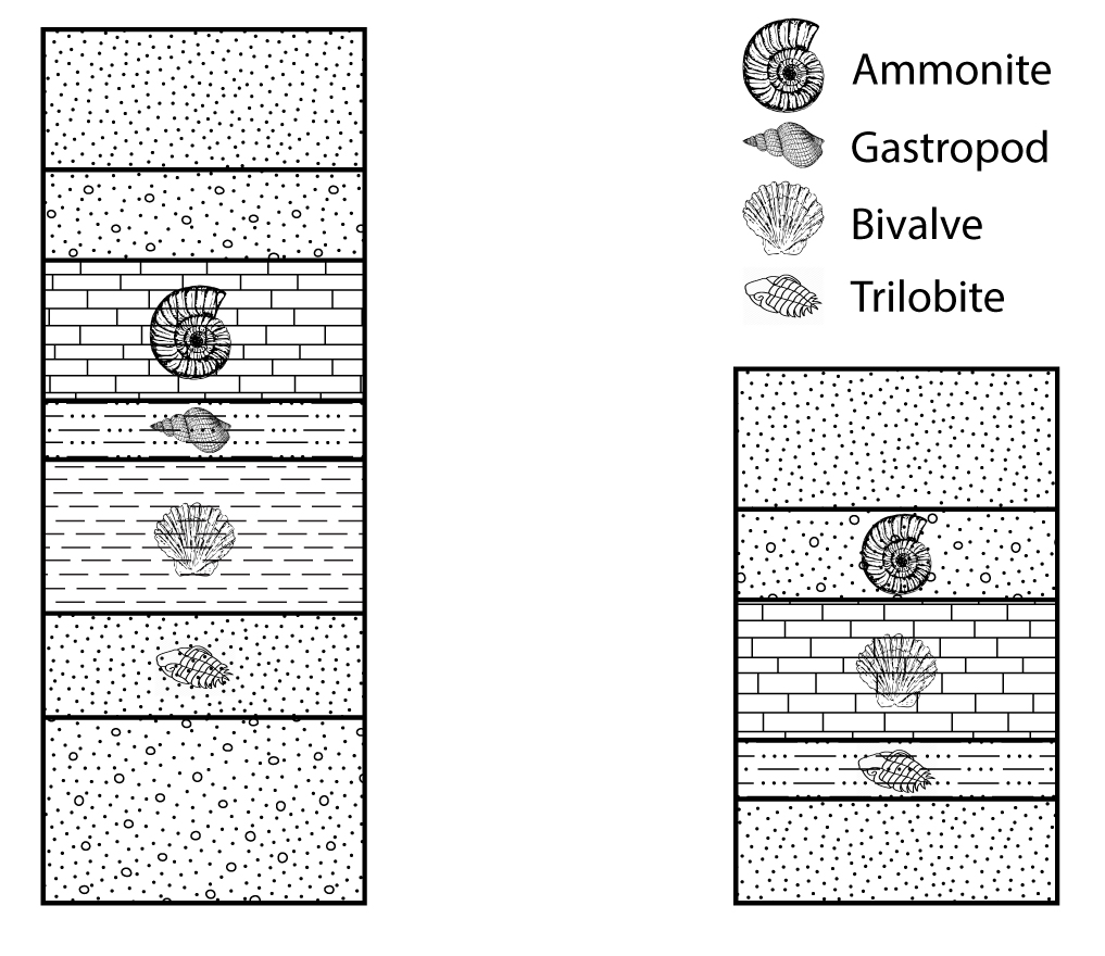 Two stratigraphic columns for exercise 3.5. Note, the fossils in some of the stratigraphic units.