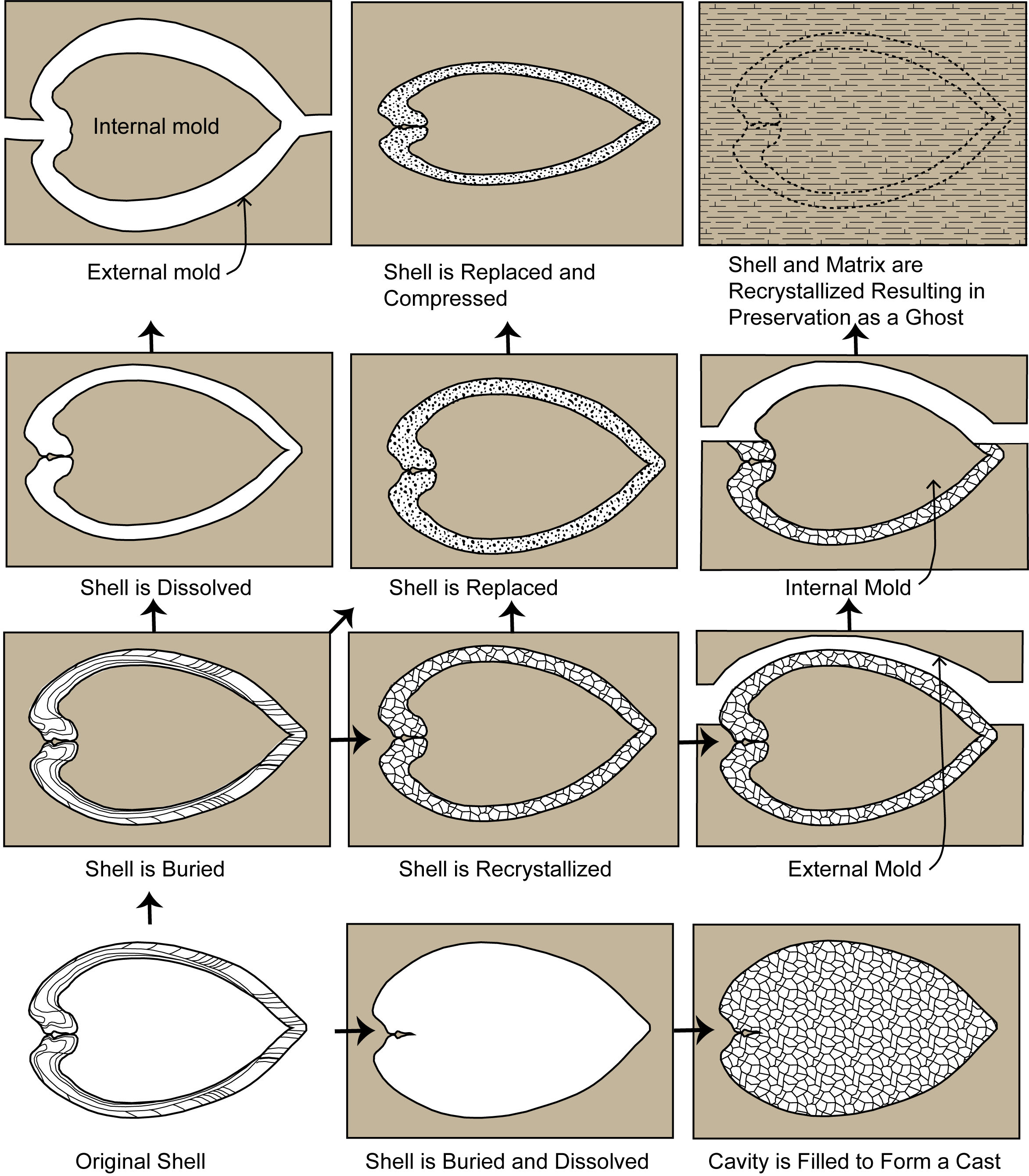 Types of fossilization including alteration, replacement that result in casts and molds.