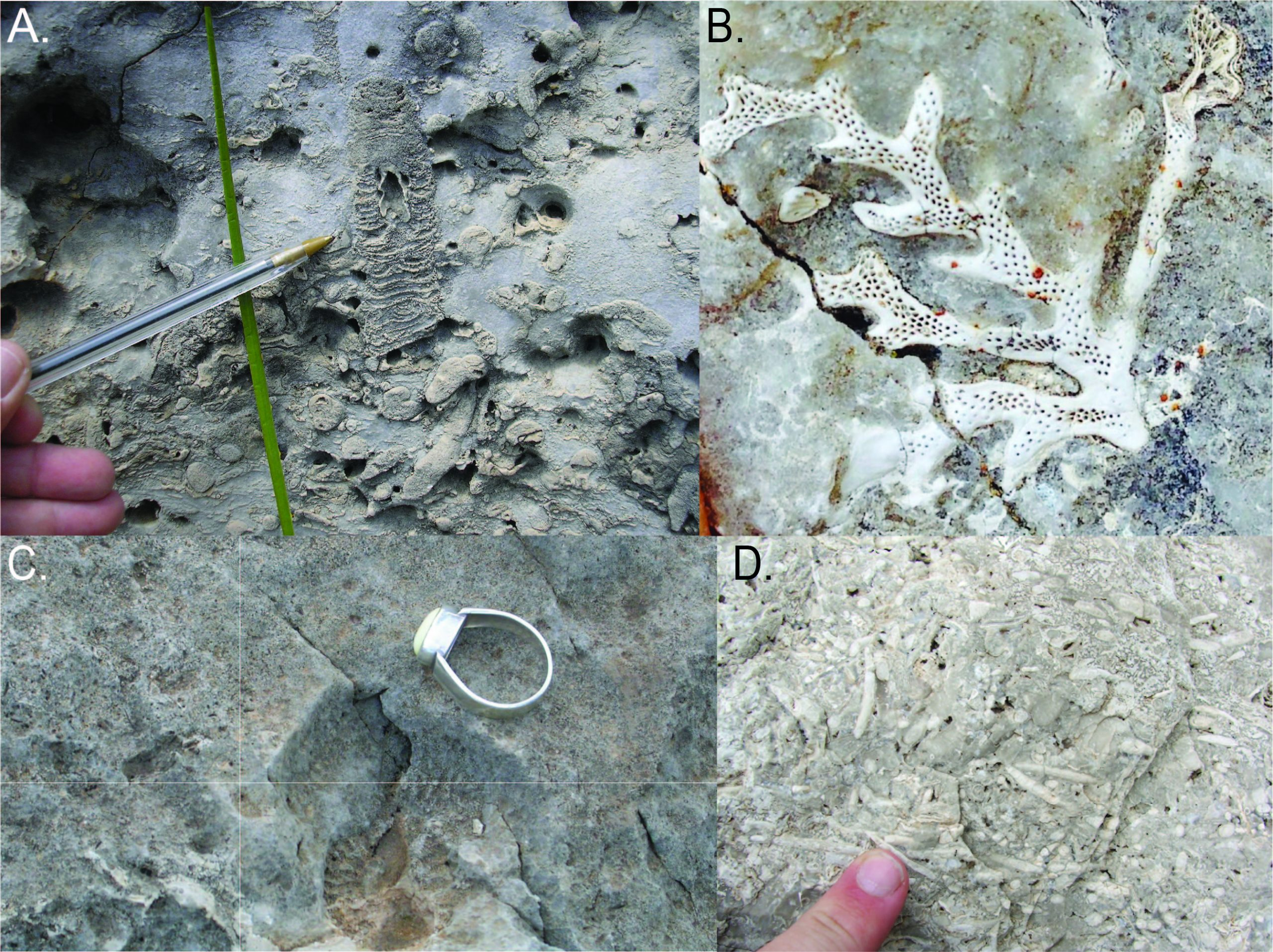 Four fossils from El Capitan reef in Guadalupe Mountain National Park