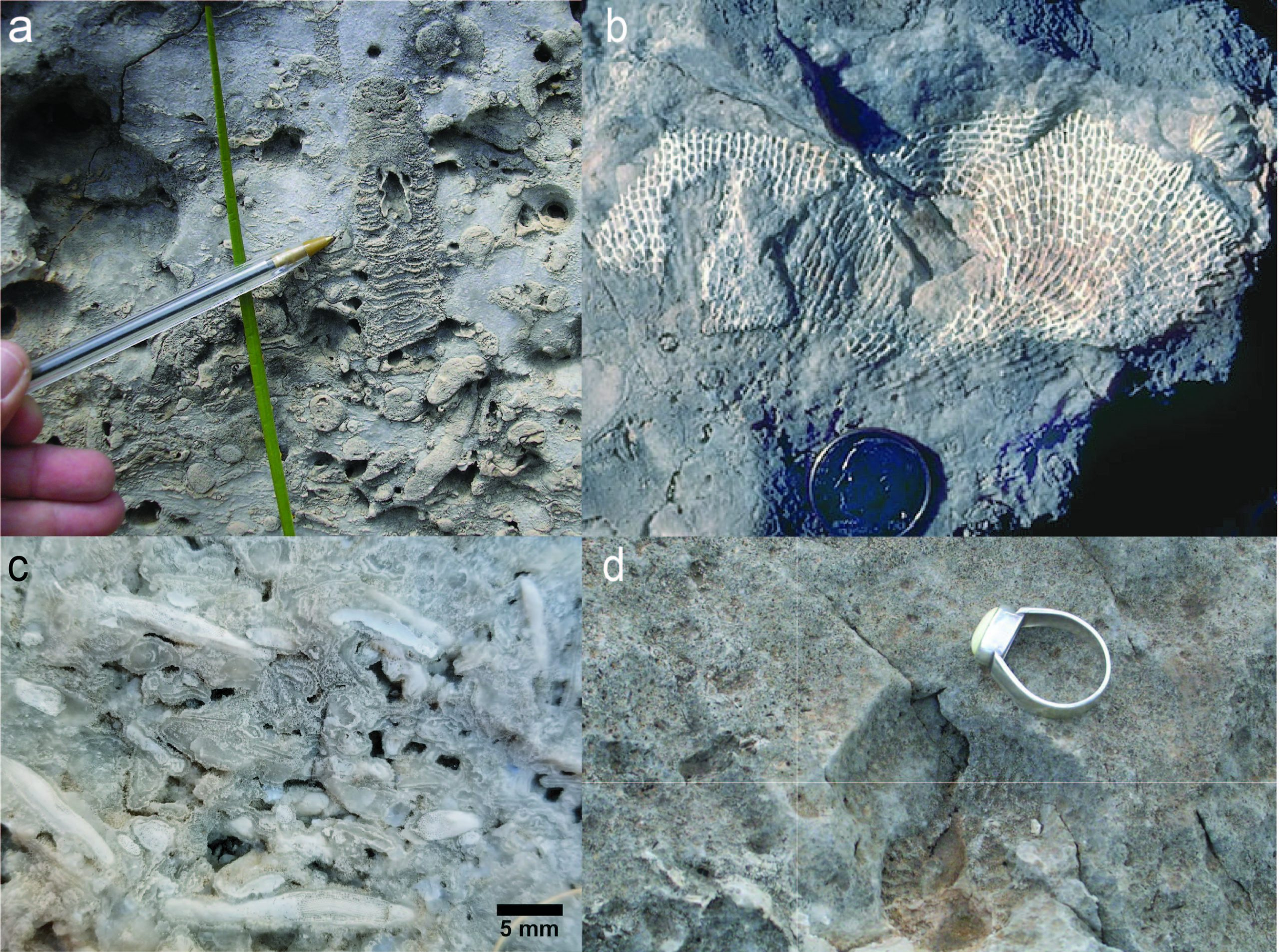 Four fossils from the Guadalupe Mtns.