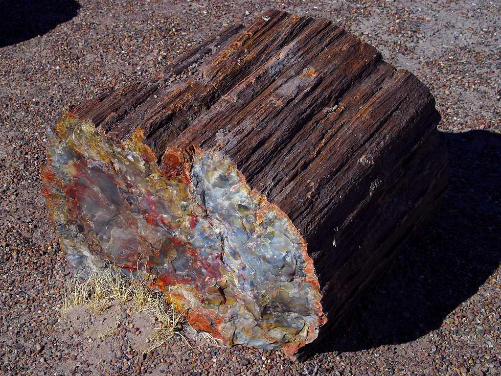Petrified wood from the Petrified Forest National Park, AZ