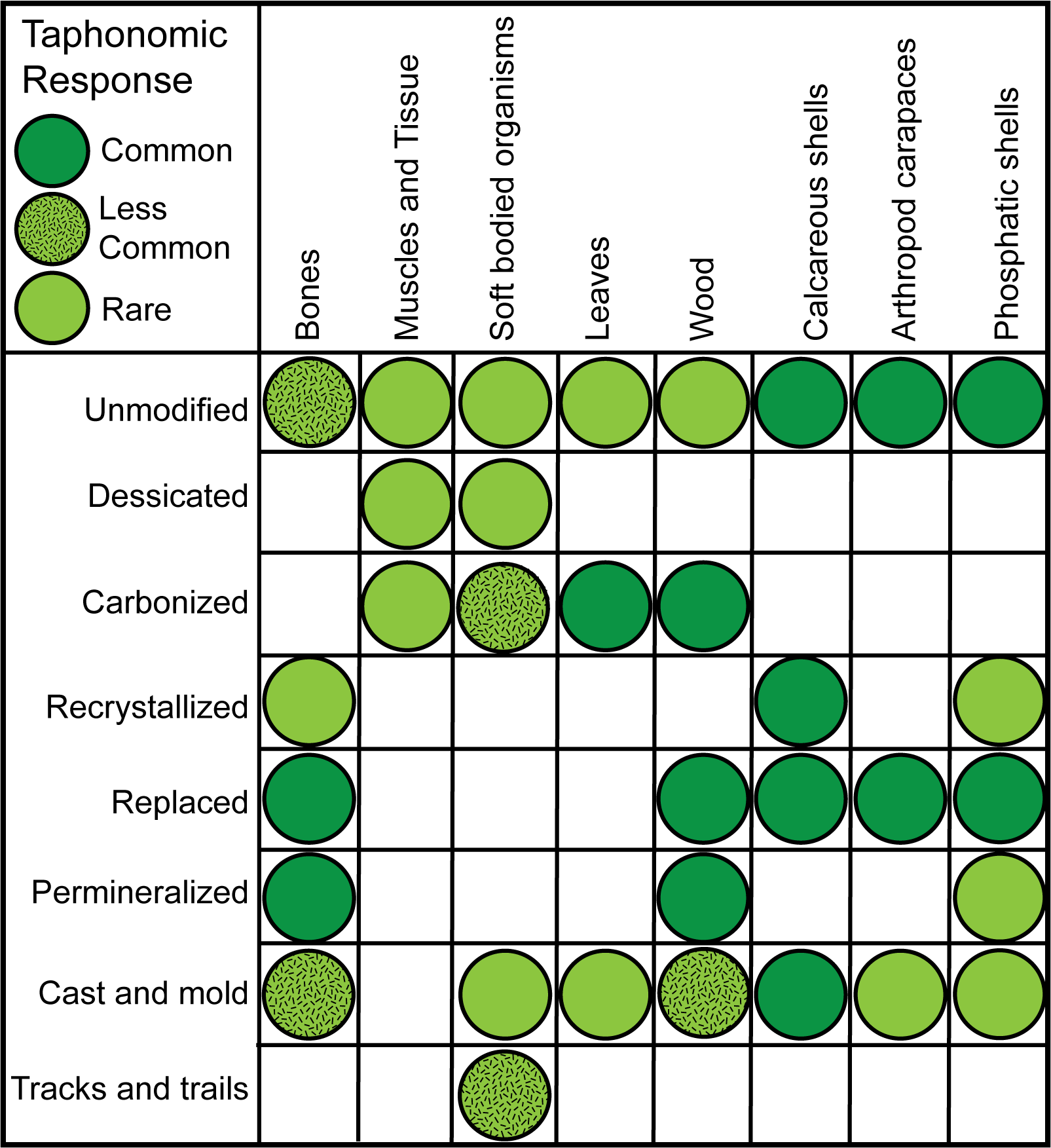 Different parts of organisms compared to how they can be preserved as fossils