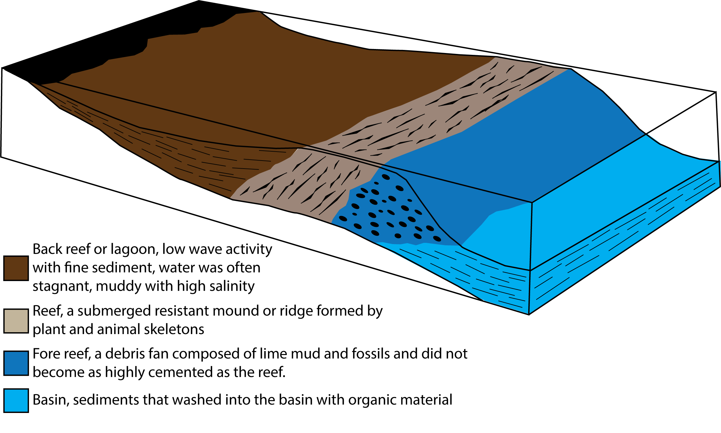 Schematic cross-section across a reef showing the back-reef, reef and fore reef as well as the marine basin