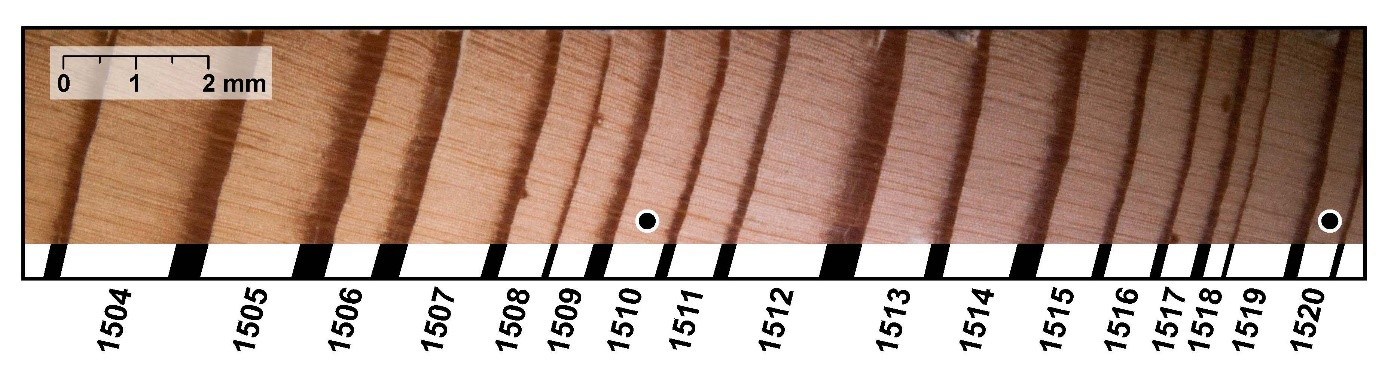 A tree ring core showing latewood (darker ring) and earlywood (lighter ring)