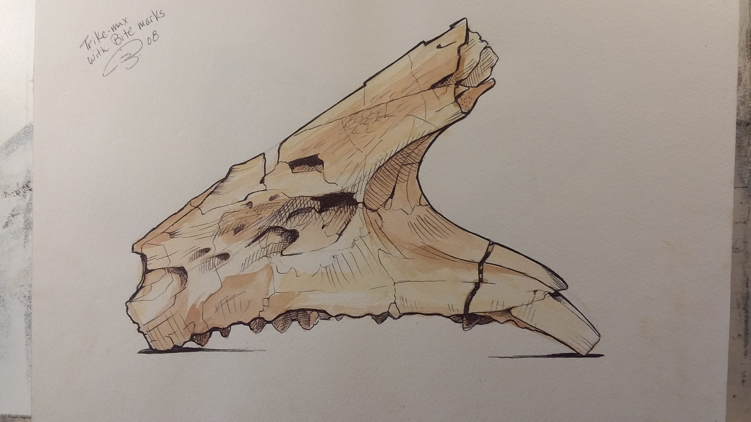 This Triceratops jaw sketch omits other surrounding details in order to focus on the bite marks.