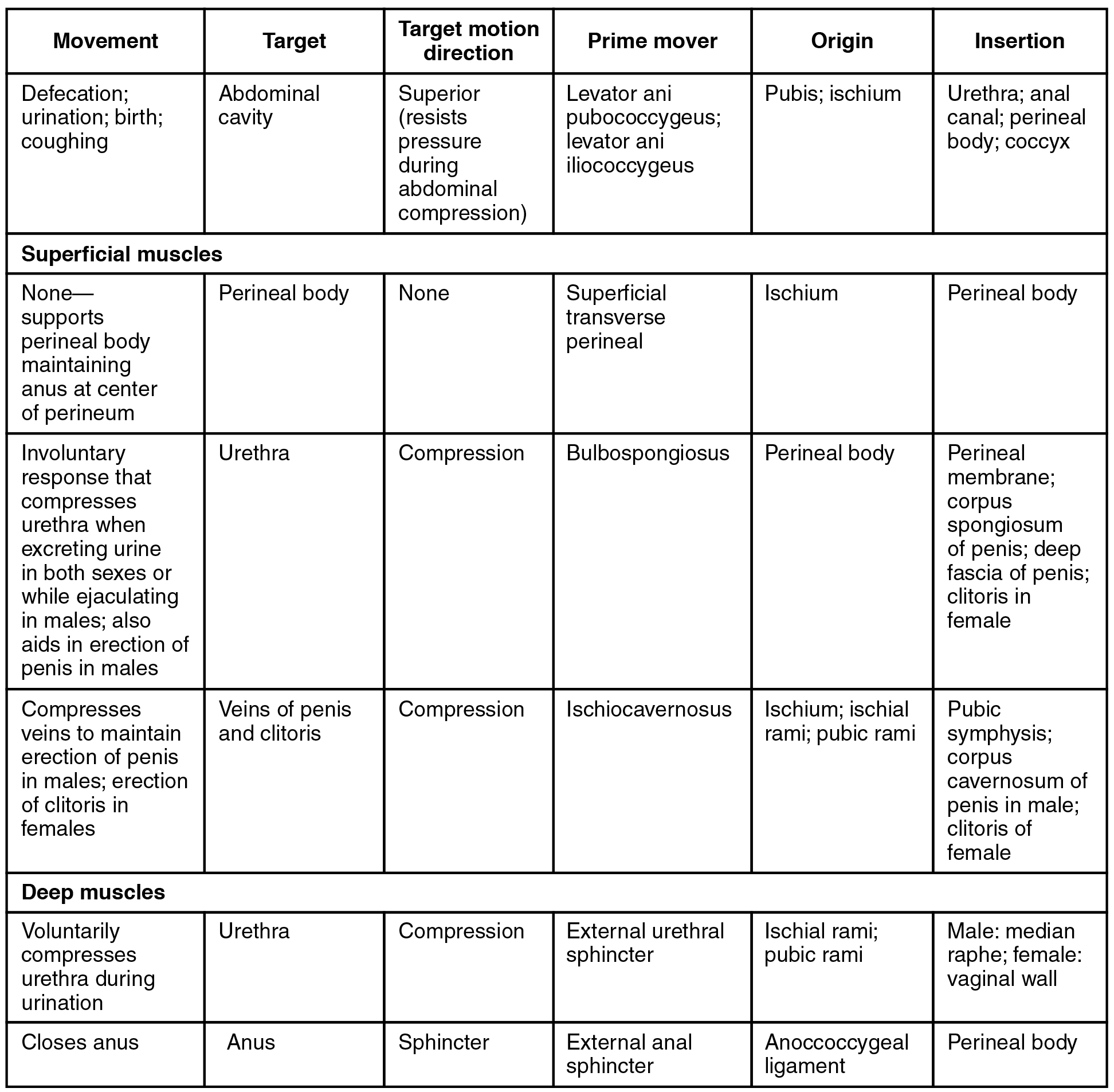 This table describes the muscles of the perineum that are common to men and women. The levator ani pubococcygeus and levator ani iliococcygeus control movements during defaction, urination, coughing, and giving birth. They originate in the pubis and ischium. The superficial transverse perineal supports the perineal body maintaining the anus at the center of the perineum. It originates in the ischium. The bulbospongiosus is a superficial muscle that causes an involuntary response that compresses the urethra when excreting urine in both sexes or while ejaculating in males; it also aids in erection of the penis in males. It originates in the perineal body. The ischiocavernosus is a superficial muscle that compresses veins to maintain erection of the penis in males and erection of the clitoris in females. It originates in the ischium, ischial rami, and pubic rami. The external uretral sphincter is a deep muscle that voluntarily compresses the urethra during urination. It originates in the ischial rami and pubic rami. The external anal sphincter is a deep muscle that closes the anus. It originates in the anoccoccygeal ligament.