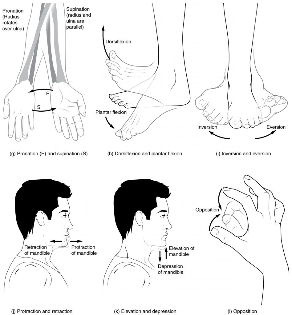 This multi-part image shows different types of movements that are possible by different joints in the body.